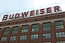 Budweiser niet groots in Nederland