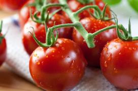 SAB plaatst Hollandse groenten op de kaart