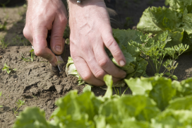 Acht tips om groente te telen op je hoteldak