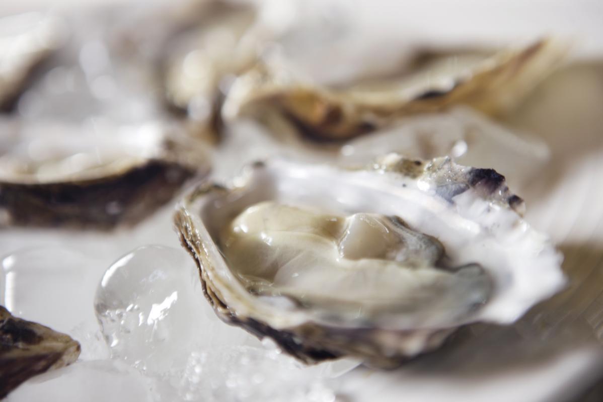 Nederlands oesterseizoen officieel geopend