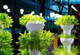Microsoft teelt groenten voor eigen bedrijfsrestaurant