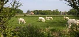 Texel Culinair in het teken van Texels rund