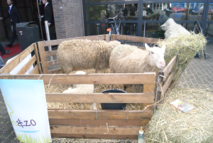 Schapen als welkomshaag bij de ingang van Food Professional Day om de aandacht te vestigen op het Nederlandse schaap