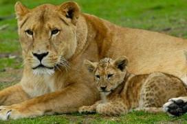 Tweeduizend bedden extra voor Safaripark Beekse Bergen