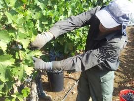 Wijn in de horeca: kwaliteit en herkomst belangrijk