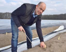 Eerste asperges volle grond 2016 gestoken