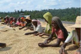 Peeze helpt boeren in Ethiopië