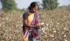 Linnenleveranciers helpen katoenboeren in India