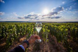 Jacobus Boelen haalt wijnhuizen naar Nederland in september