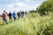 Op jacht naar eetbare planten: 10 wildpluk-tips