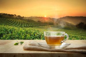 Gezocht dutch tea thee champion