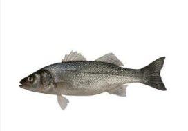 Visquota: minder zeebaars, meer tong