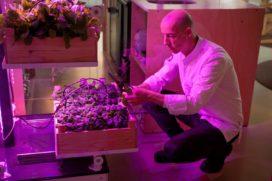 Kweecker: lancering slimme kweekkas voor koks