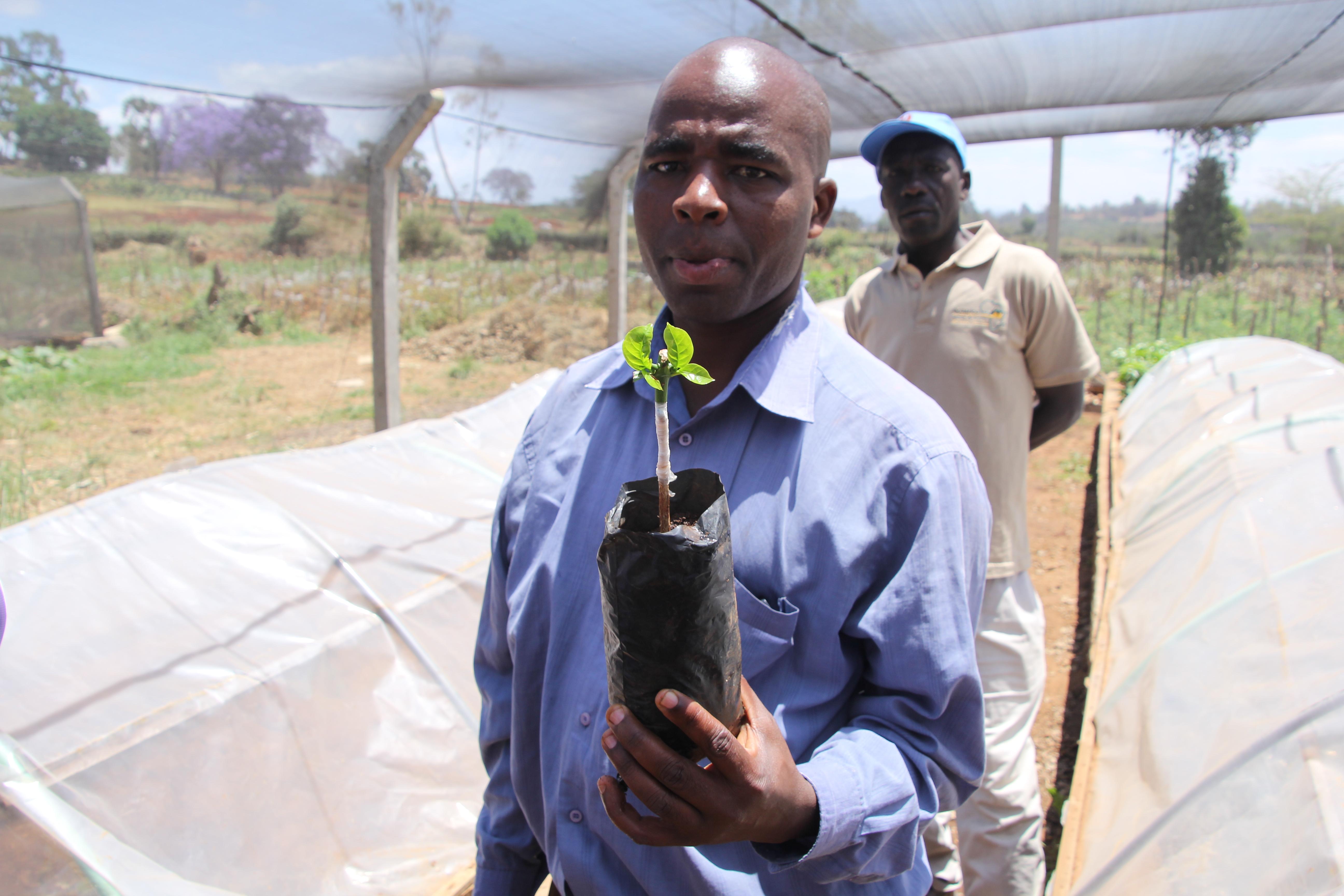 Eduard Mbayo toont één van zijn 70.000 stekjes