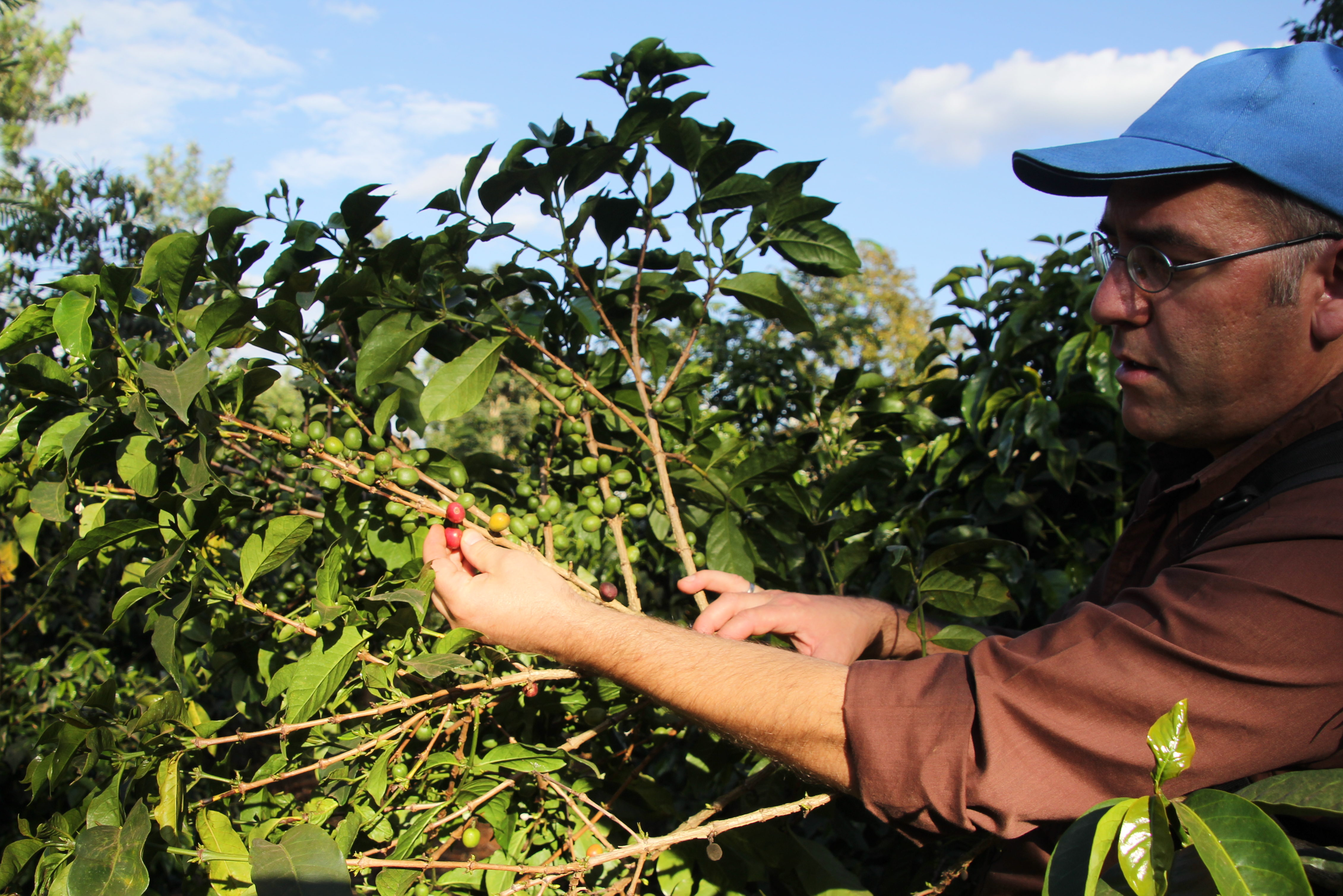Koffie plukken in Kenia met Joost Leopold
