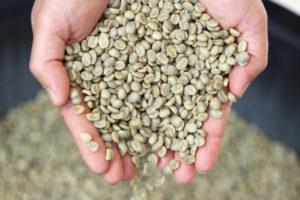 Handel in 'rauwe' koffie: de weg van de groene boon