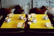 Trends in tafelaankleding: duurzaamheid, thuisgevoel en gemak