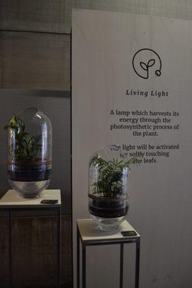 Living light 280x420