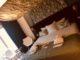 Golden tulip strand hotel westduin nieuwe duinsuite 4 80x60