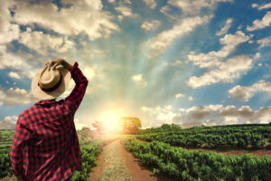Koffie in gevaar: helft oppervlak plantages in 2050 onbruikbaar